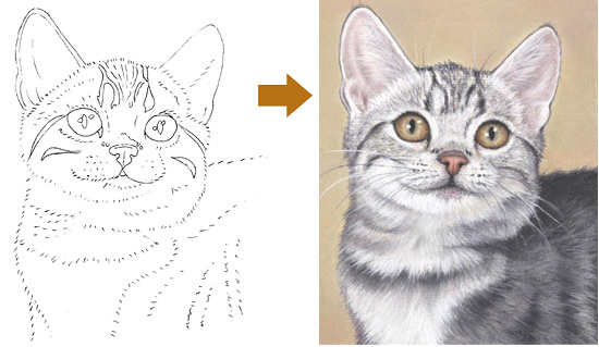 Learn how to draw this grey kitten in one of Colin's workshop packs.