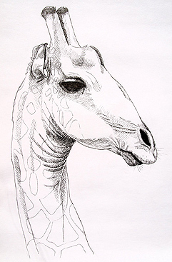 Giraffe by Sue Pownall