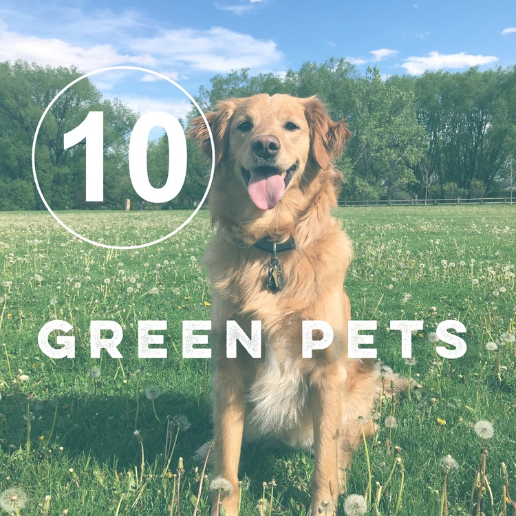 Day 10 of the Zero Waste Challenge! How do you go zero waste when you have pets?