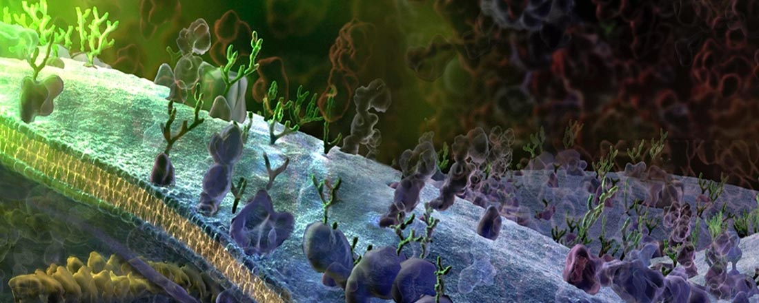 Visualisation of the surface of a cell at the molecular level. Credit Graham Johnson (fivth.com), used with permission.