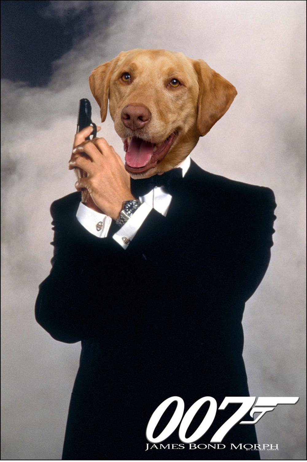Hurley the Labrador as James Bond