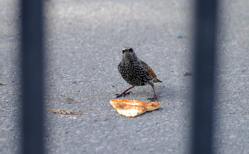 Bird and Pizza.png