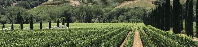 vineyard panorama.jpeg