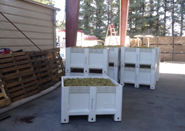 The Harvest is in at Homewood Winery