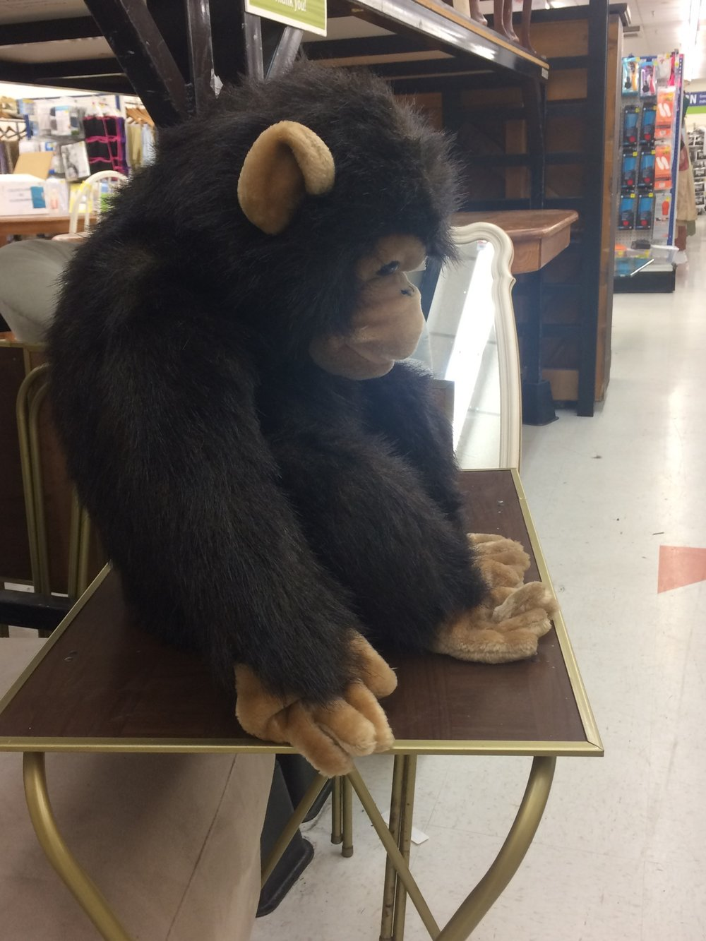 I feel a bit like this chimp at Goodwill.