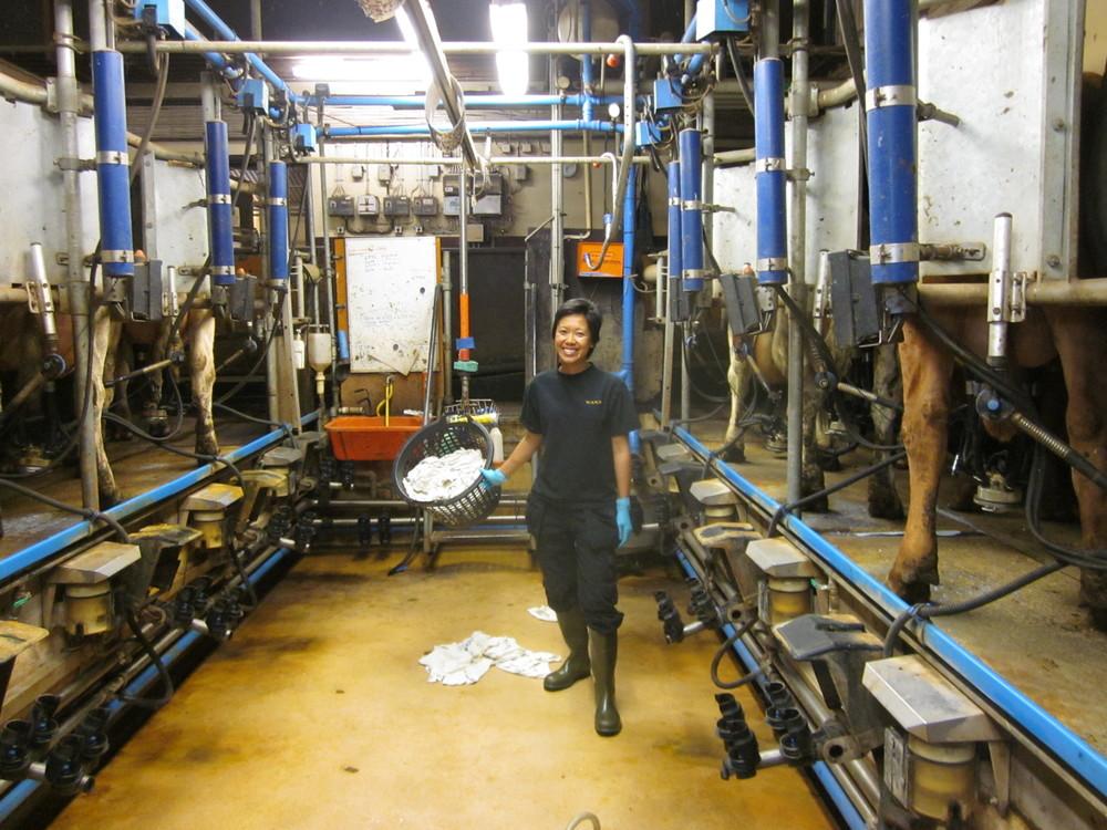 Renee Cheung milking cows in Sweden, 2013
