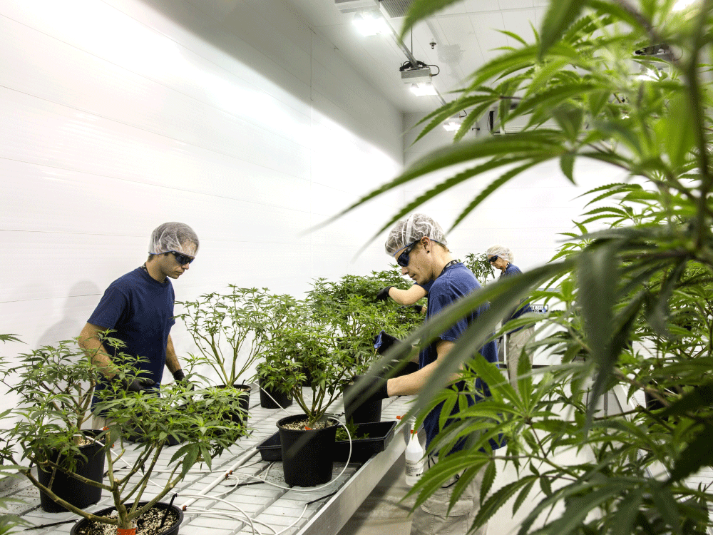 Canada's marijuana heavyweights set sights on the ultimate prize: Conquering the world —  Financial Post Feb 9, 2018