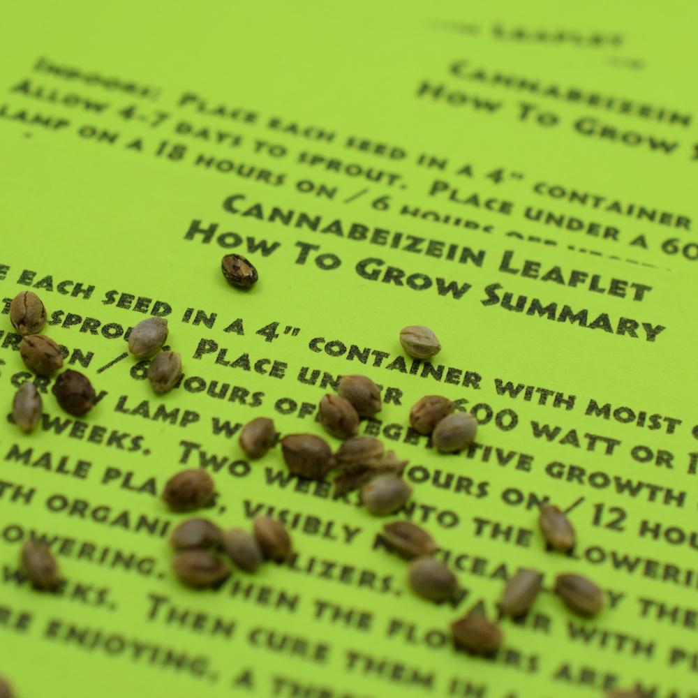 Cannabeizein 0187 - Leaflet - DSC_0067.jpg