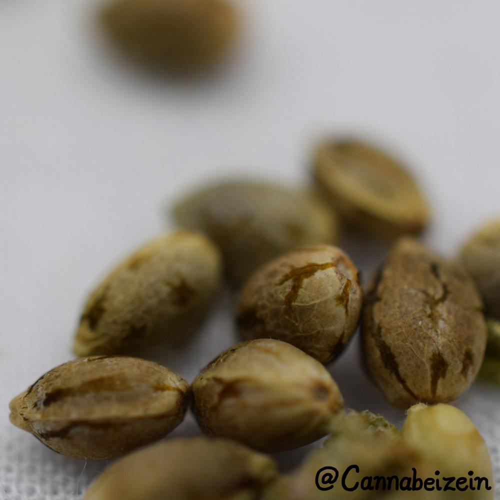 Cannabeizein 0215 - Mystery Mix Seeds - DSC_0790 copy.jpg