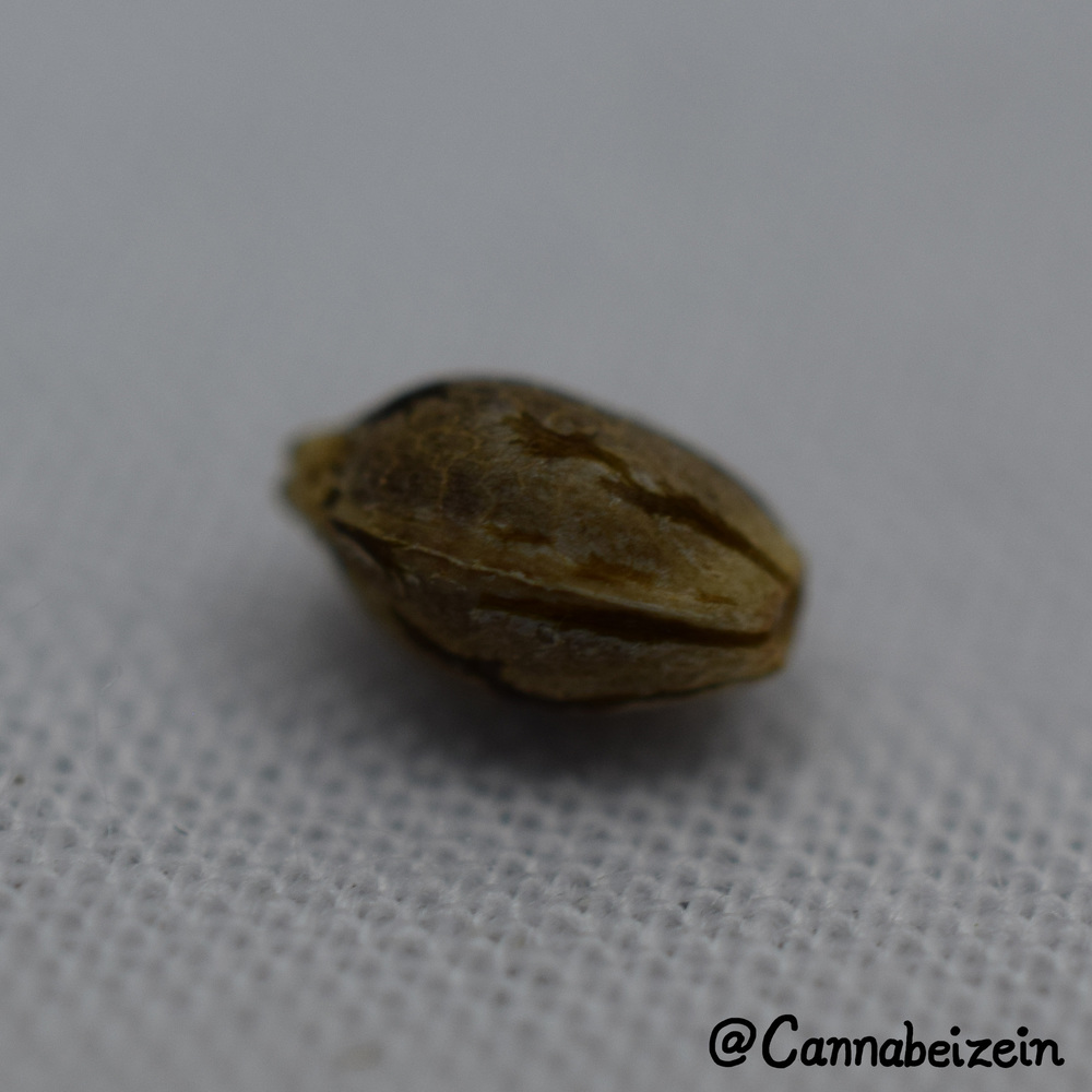 Cannabeizein 0219 - Mystery Mix Seeds - DSC_0804 copy.jpg