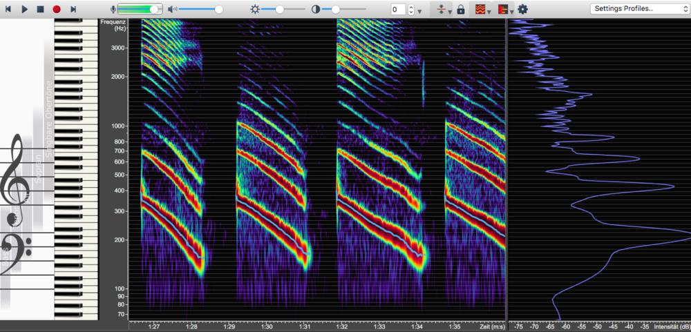 Die Vokale I und U im Wechsel. Dabei gleitet die Tonhöhe ab. Aufgenommen mit der Software Overtone Analyzer.