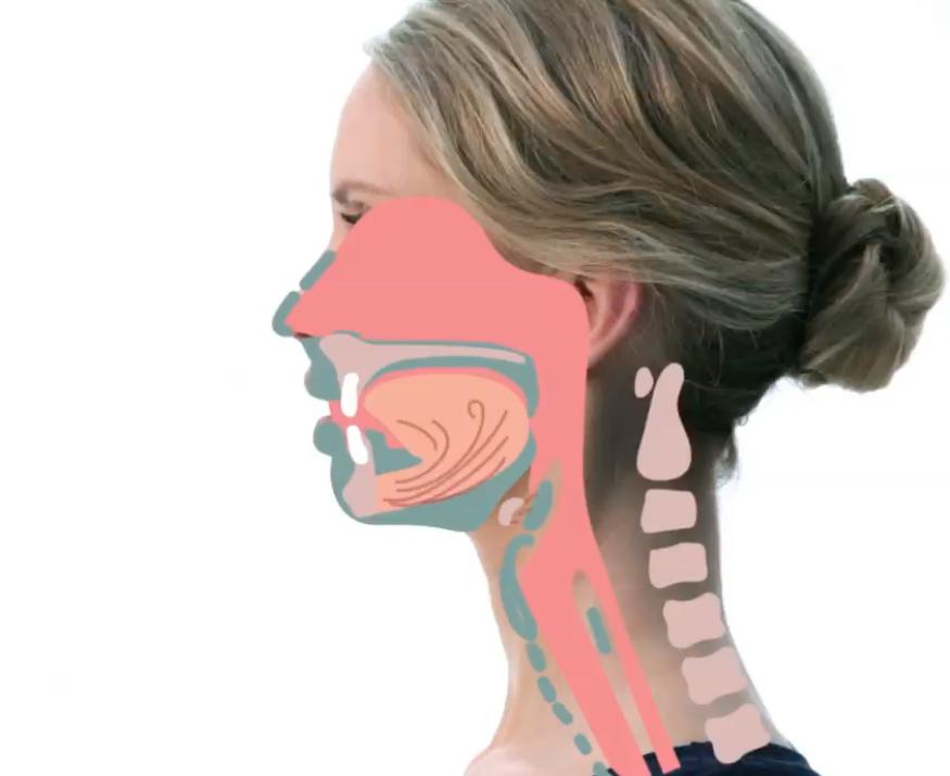 An der Artikulation sind die Lippen, der Kiefer, die Zunge und das Gaumensegel beteiligt.  (Photo: Screenshot aus VOCCO, Julia Rupprecht)