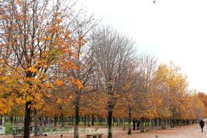 Jardin du Tuileries 3