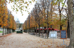 Jardin du Tuileries 2