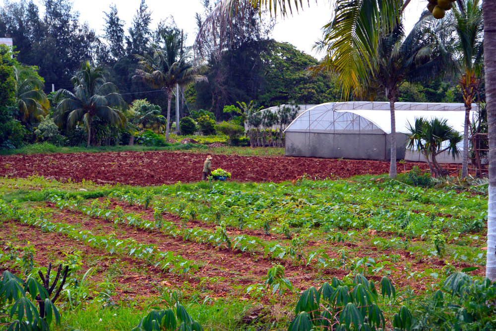 Cuba Farming Projects