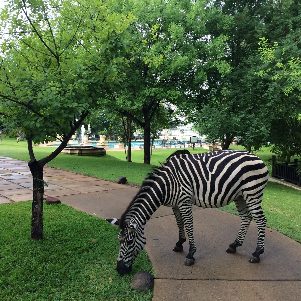 Zebras at Victoria Falls