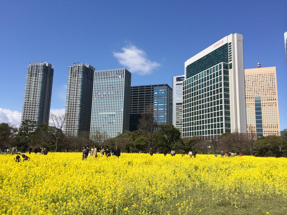 ZoomVacationsJapanTokyoYellow.JPG