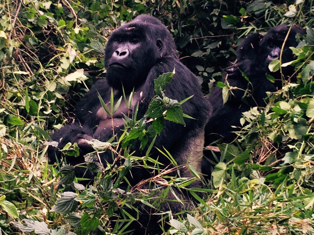 Rwanda Gorilla Trekking, October