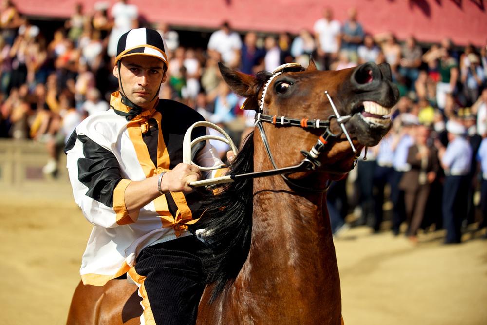 Palio Di Siena Horses