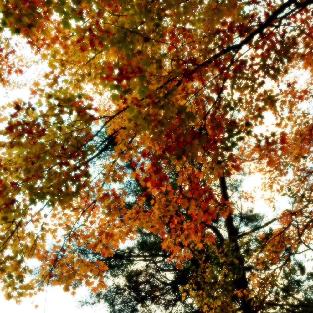 ©Colors In Sky By Dena T Bray