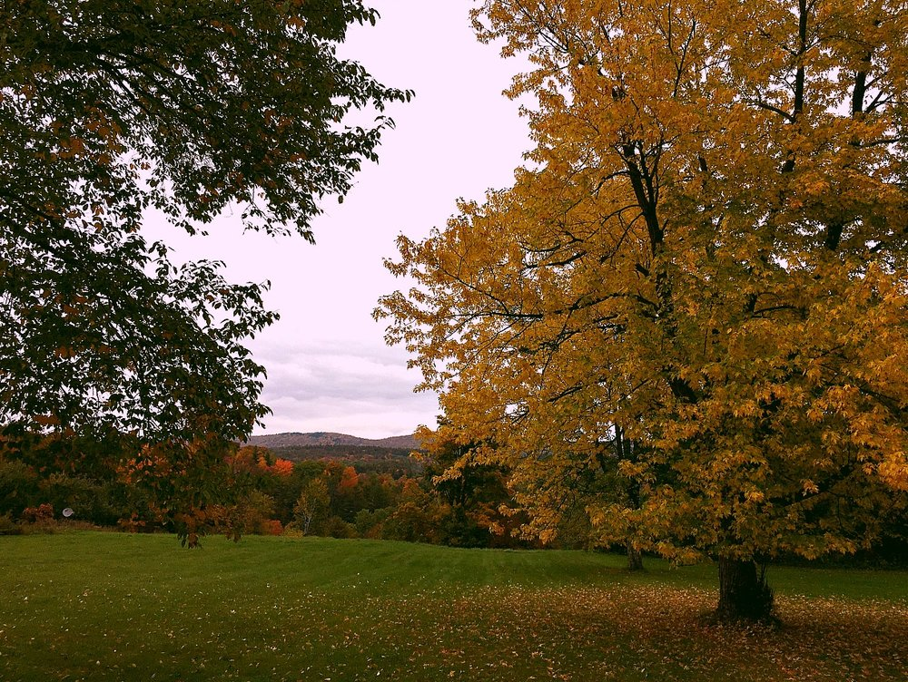 ©Golden Tree in Field by Dena T Bray.jpg