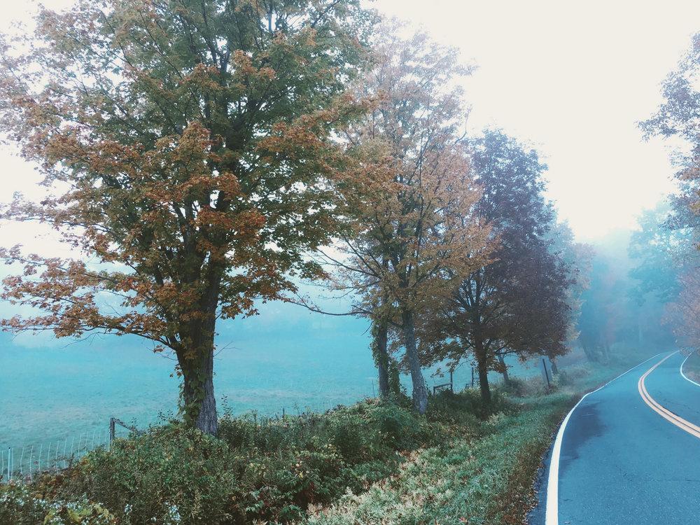 ©Dogford Road 3 by Dena T Bray.jpg