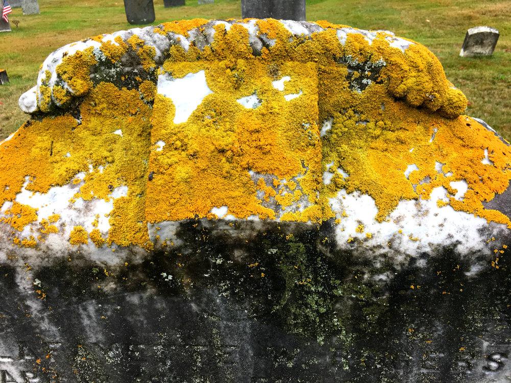 ©Moss On Headstone 2 by Dena T Bray.jpg