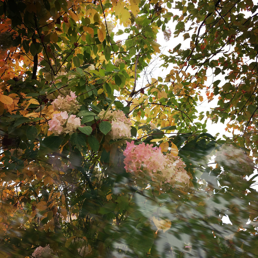 ©Pink Flowers in Motion by Dena T Bray.jpg
