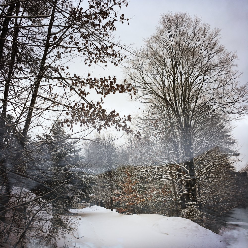 (c)Winter Scene by Dena T Bray.jpg