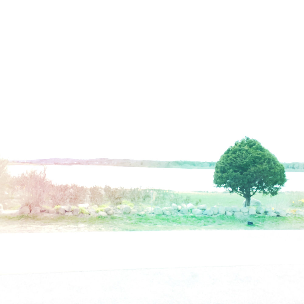 ©The Cape. Tree Near Salt Pond.jpg