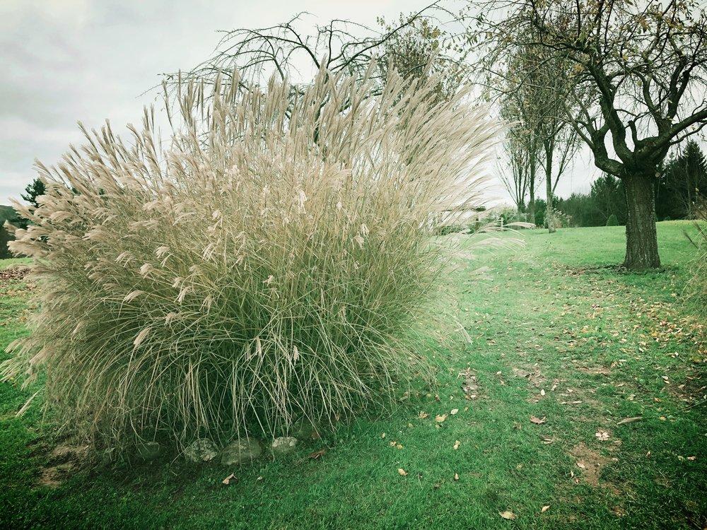 ©Beginning of the Labyrinth by Dena T Bray.JPG