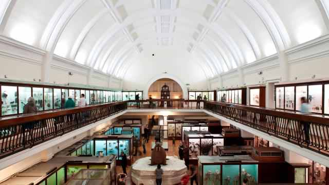 Horniman Museum and Gardens   A FREE museum which holds an extensive collections of anthropology (that is the study of humankind to you and me), natural history and musical instruments. The museum also holds exhibitions, shows etc. A trip that could be educational as well as fun.