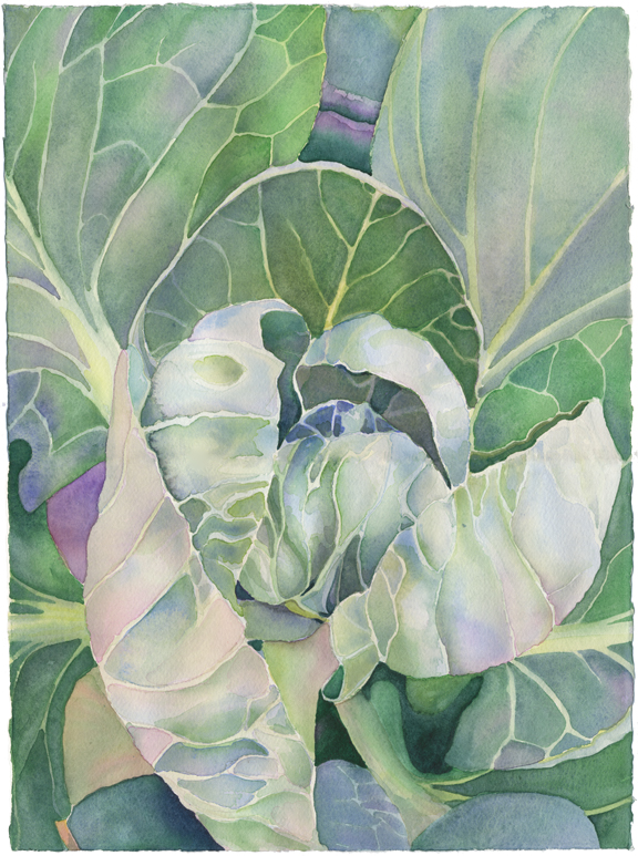 """Brussels Sprouts"", 2009, 11""x14"", watercolor on paper"
