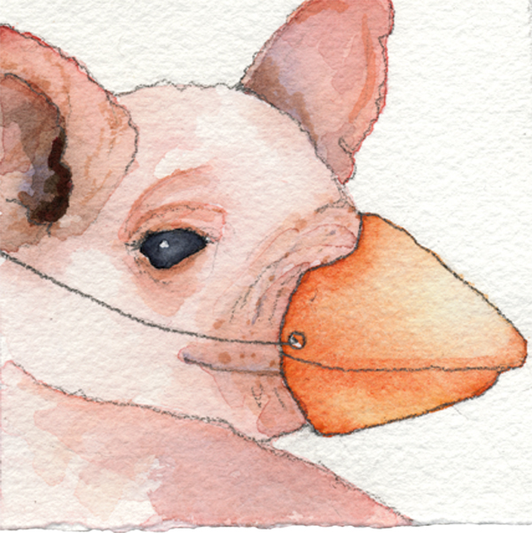 Pig_website.jpg