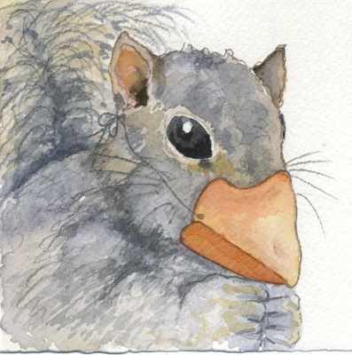 squirrel_website.jpg
