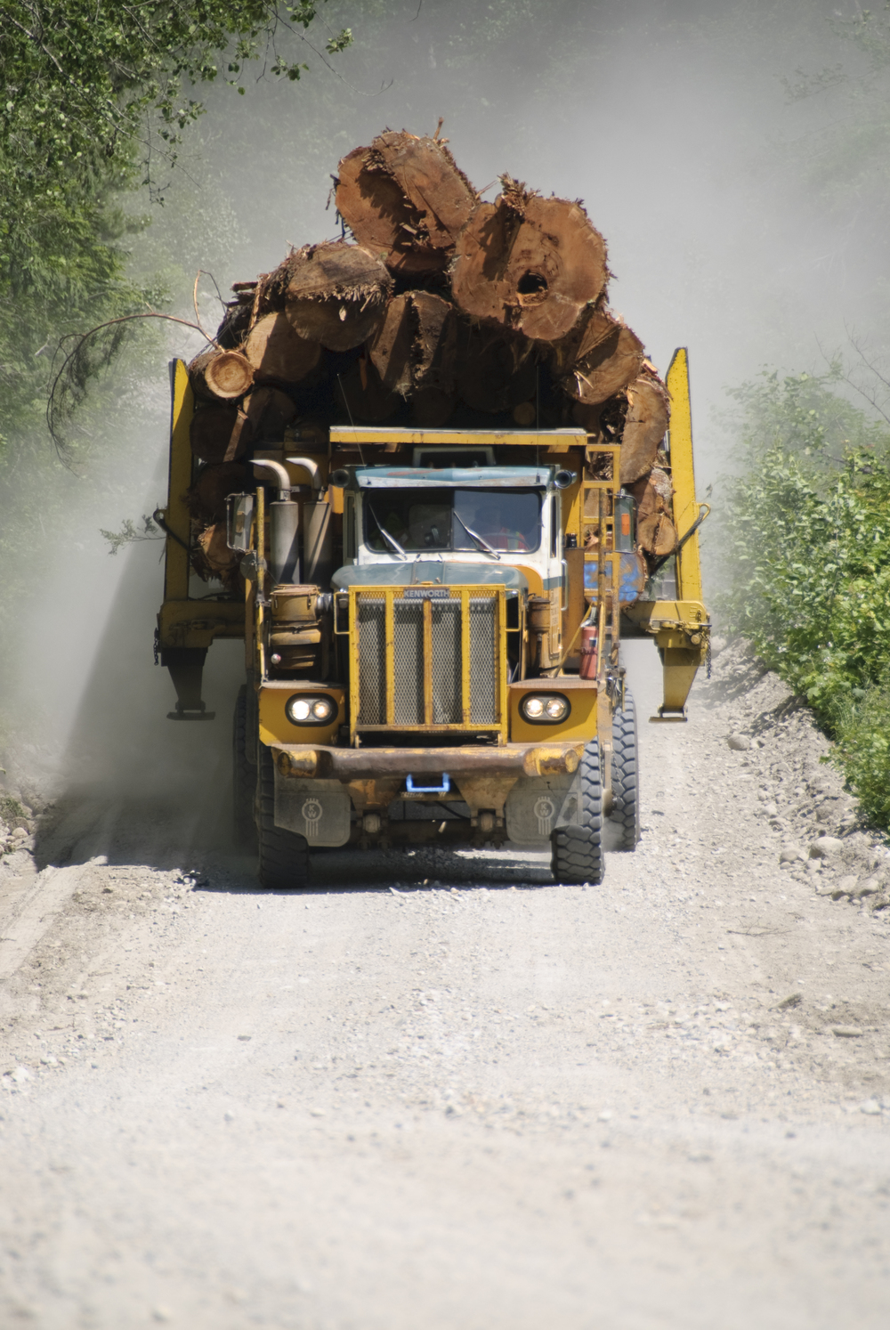 Logging Services, Stump To Dump, Roads & Bridges