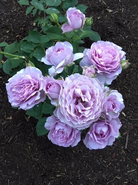 Portland Florist|Oregon Florist|Austin Florist|Good Seed Floral design