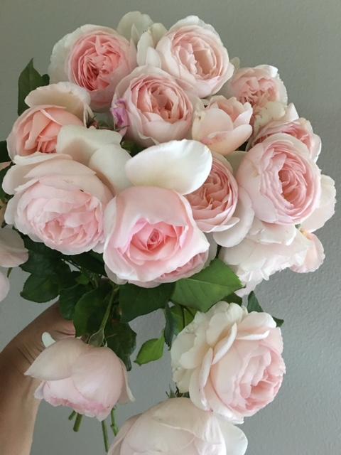 Good Seed Floral Design pink peonies