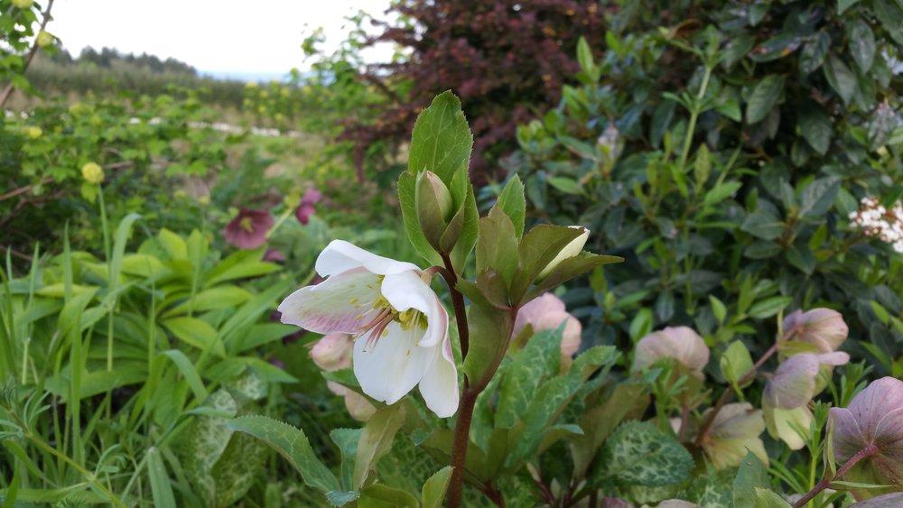 Portland Florist|Oregon Florist|Oregon Flower Farm|Austin Florist|Good Seed Floral Design