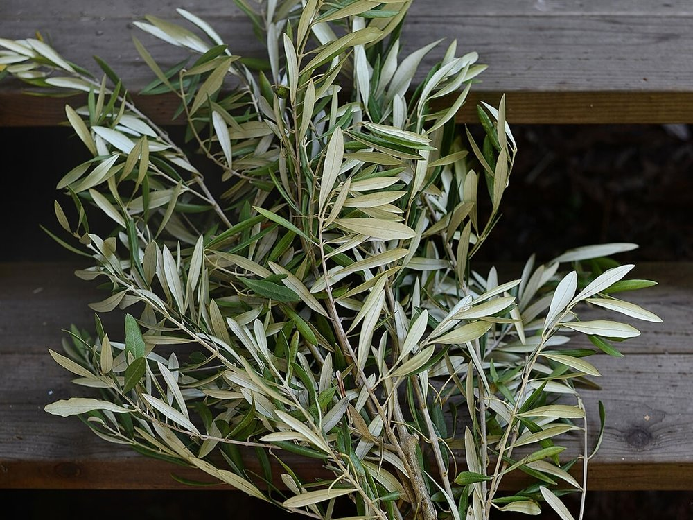 Olive Branch: - Season: year round, but it's best in spring & summerOlive is one of our most widely used greeneries- we especially love it for a wild, hand placed garland, or for an added texture to an arbor. It can be a little dry and crispy sometimes unlike most greeneries, but this allows it to add a sharper texture if the feeling of your arrangement is too soft. It also causes it to pair perfectly with high desert settings or drier climates. Keep in mind, it's not a very full greenery, so try using it more to add shape, flow and texture, rather than filler. And as always, moderation is key, so use it strategically or else your arrangment will look sharp and stiff.