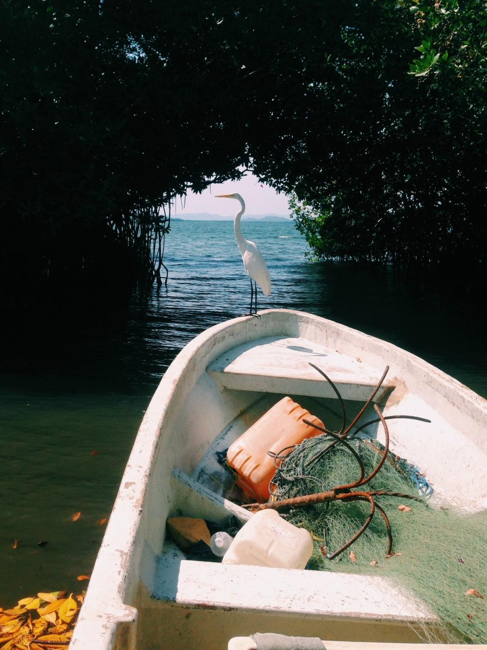 mexico bird on boat.JPG