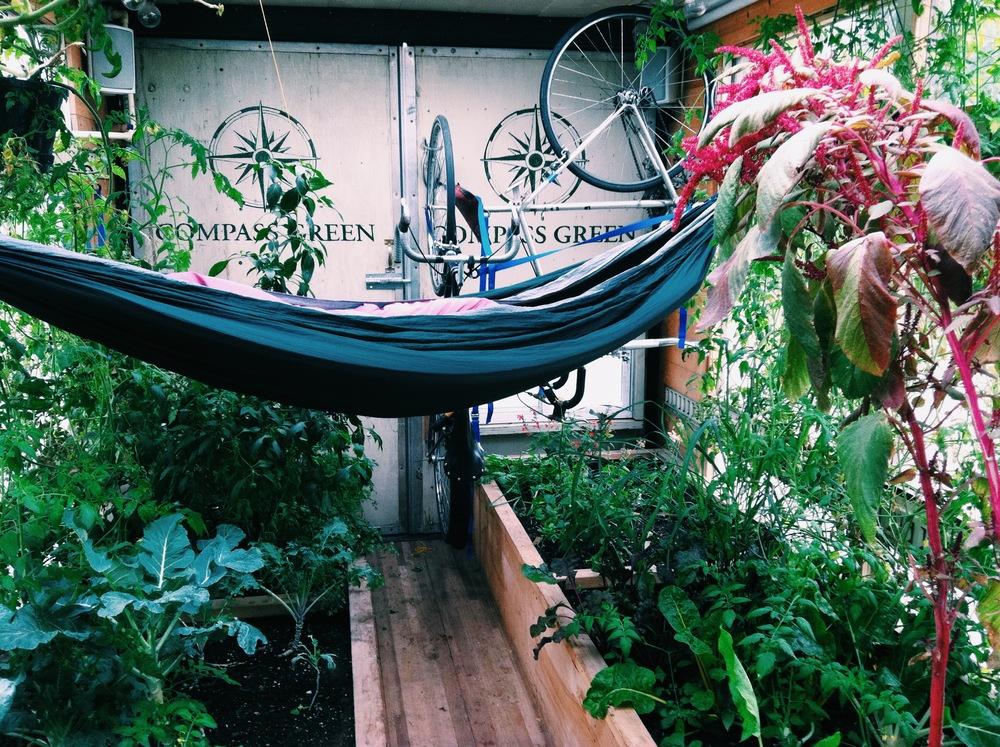 cg hammock shot.jpg