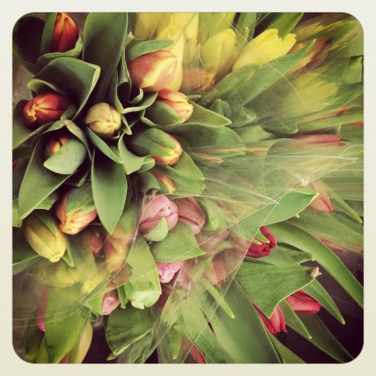 cut.flowers.tulips.jpg