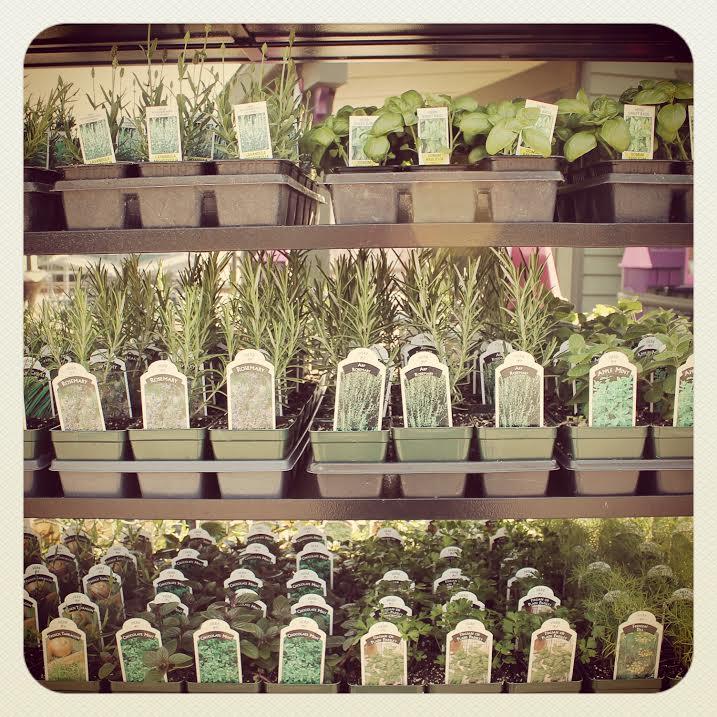 herbs.instagram.jpg