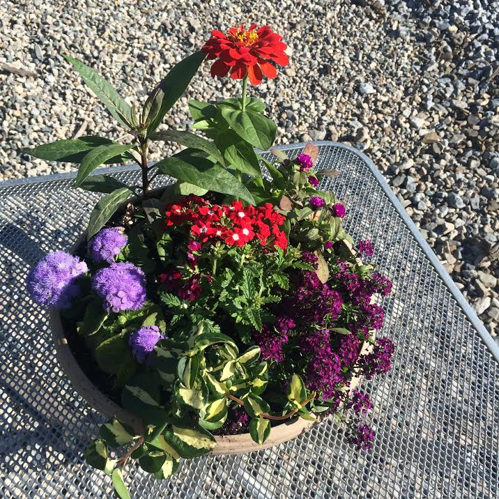 How To Build Your Own Butterfly Garden!