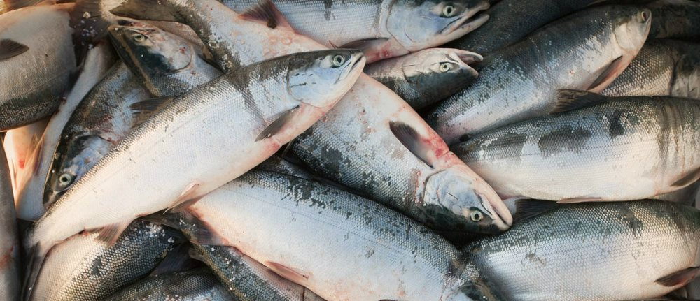 Image viahttp://www.copperriversalmon.org/