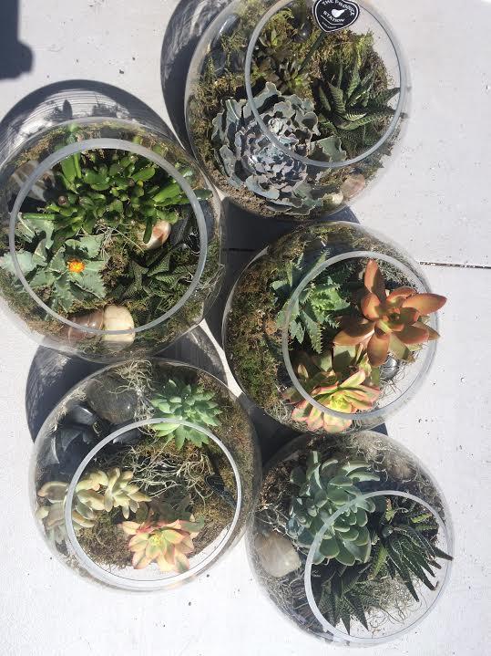 succulents.4.jpg