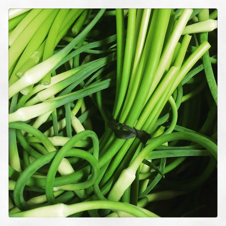 local.garlic.scapes.jpg