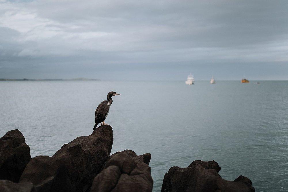 New-Zealand-Elopement-Photographer-46.jpg