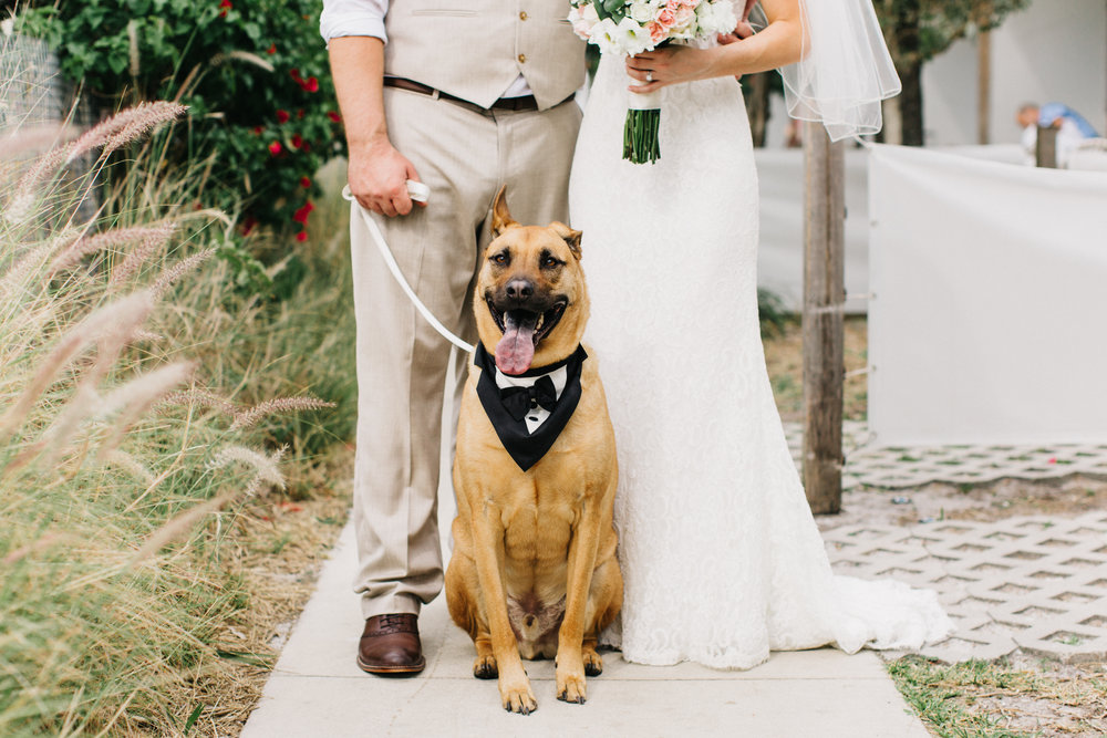 dog_in_wedding_st_pete
